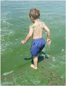 child in algae.jpg
