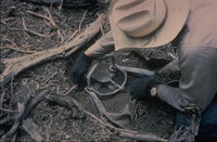 Wildlife Services employee setting a trap (Dept. of Agriculture)