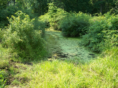 photo of a wetland area in Pennsylvania