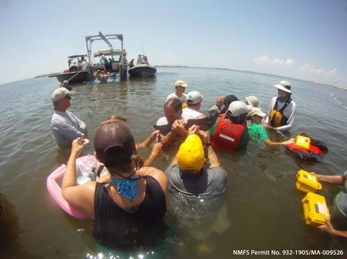 Dolphin health assessment in Barataria Bay.jpg