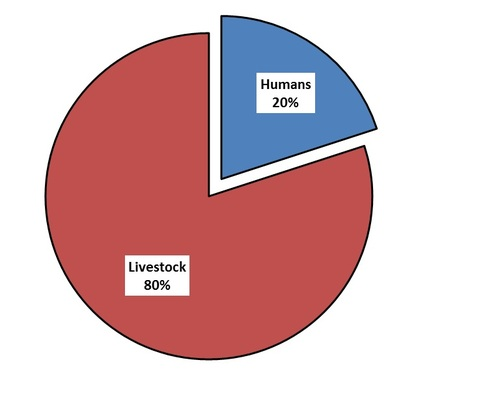 ABX used in animals pie chart.jpg