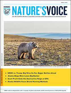 Natures Voice: Fall 2018 issue cover