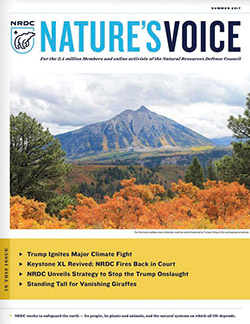 Natures Voice: Summer 2017 issue cover