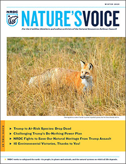 Natures Voice: Winter  2020 issue cover