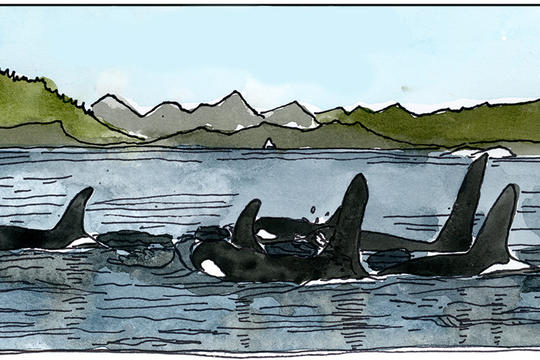 To Save Orcas, First Save Salmon | NRDC