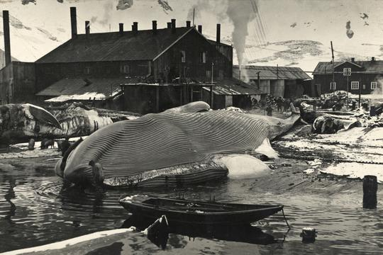 Frank Hurley/Scott Polar Research Inst./Univ. of Cambridge/Getty