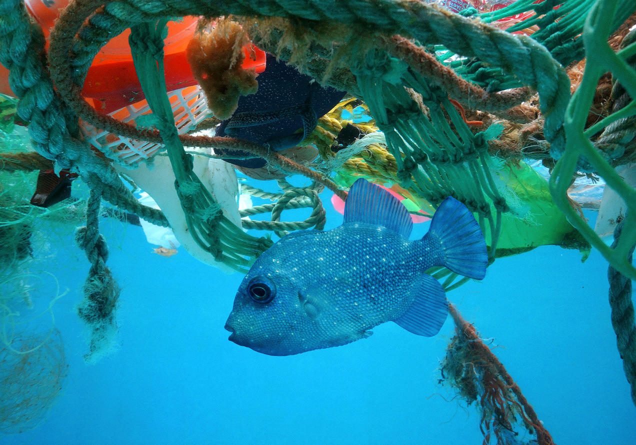 Image result for ocean pollution
