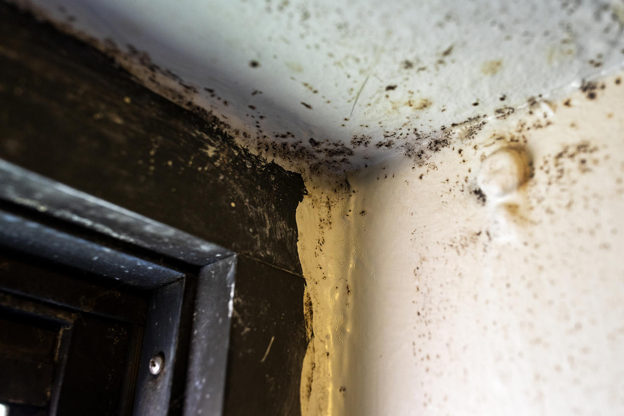 How Can I Fix Mold And Lead Paint Issues In My House On A Small Budget