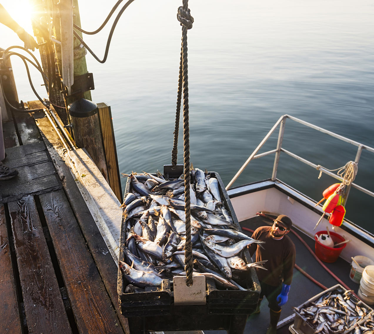 Can Anything Be Done to Stop Overfishing? | NRDC