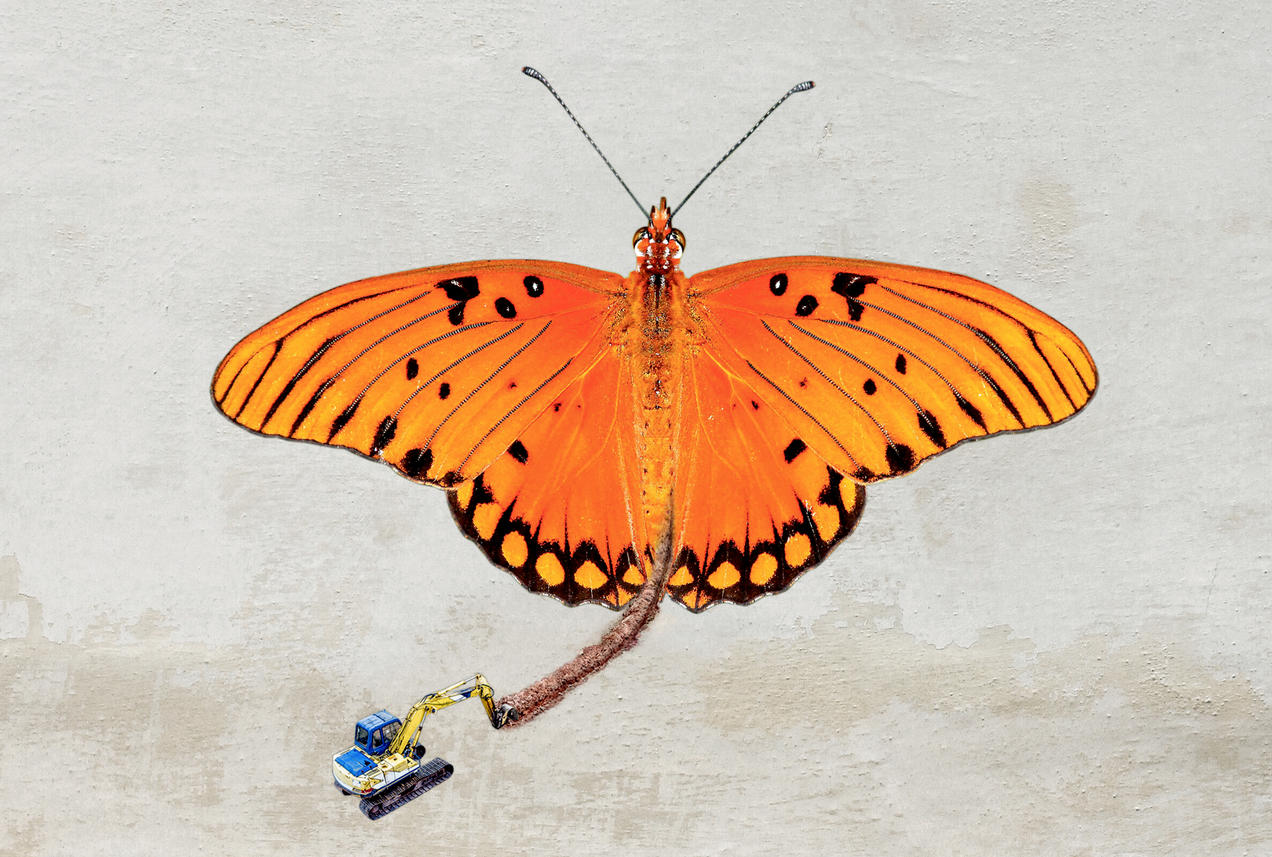 Carbon dating method images of butterflies