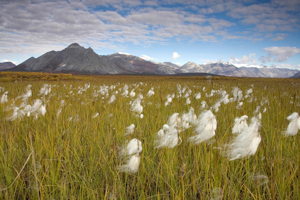 The Long Battle For Arctic National Wildlife Refuge Nrdc Scroll Saw Wilderness Hillebrand Usfws