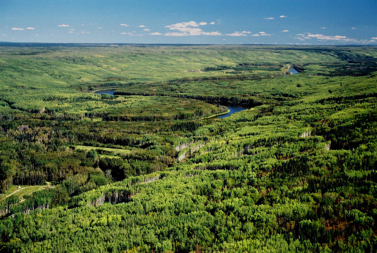 Action Alert Save Urban Forests Now American Forests >> Why We Can T Fight Climate Change Without An Intact Boreal
