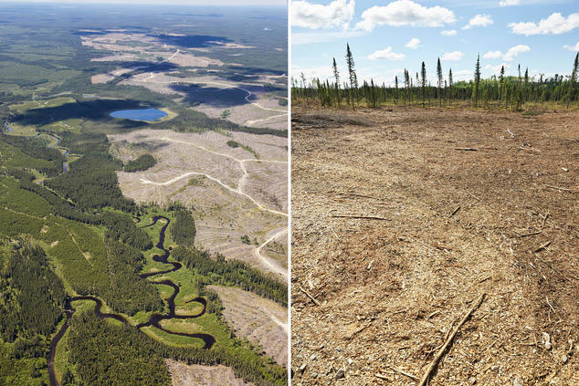 Images of barren clearcuts in Canada's boreal forest.