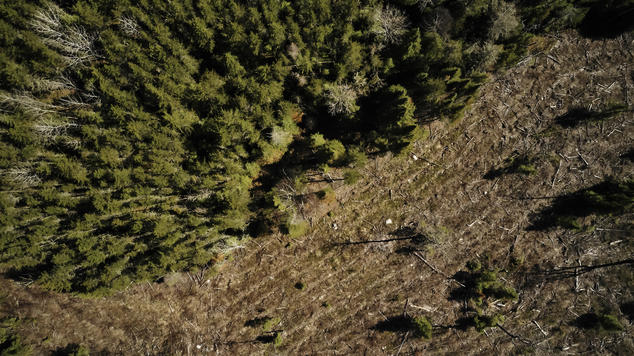 Aerial image of boreal clearcutting. Pulp from boreal trees is used to make tissue products.