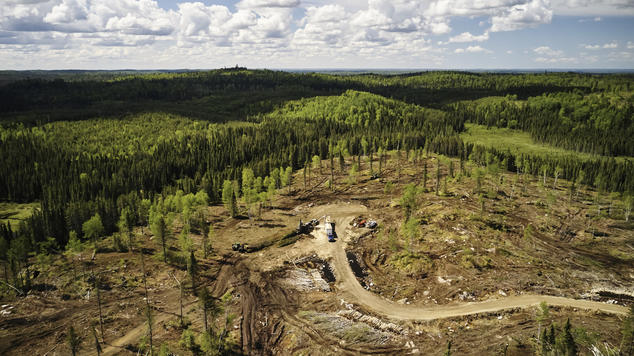 Image of boreal clearcut