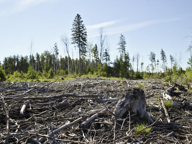 A picture of a clearcut in Ontario