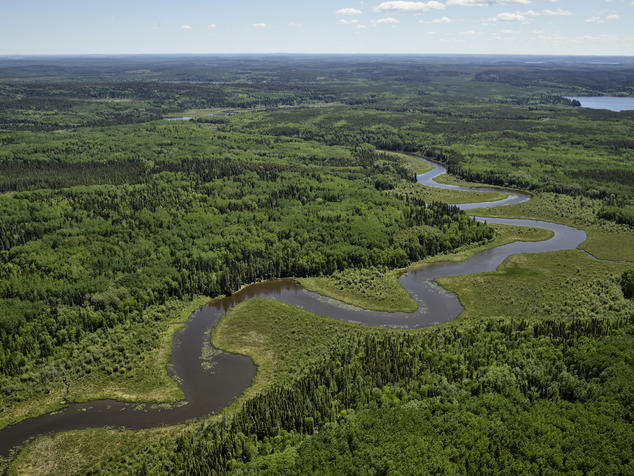 Image of healthy boreal forest