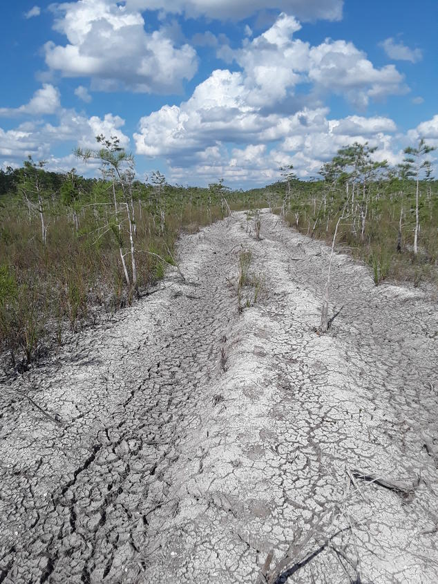 Soil Damage in Big Cypress National Preserve