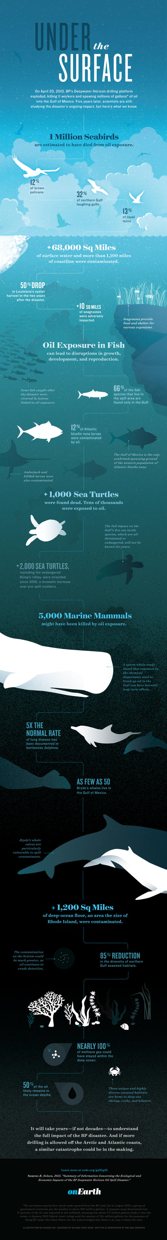 BP oil spill impacts infographic