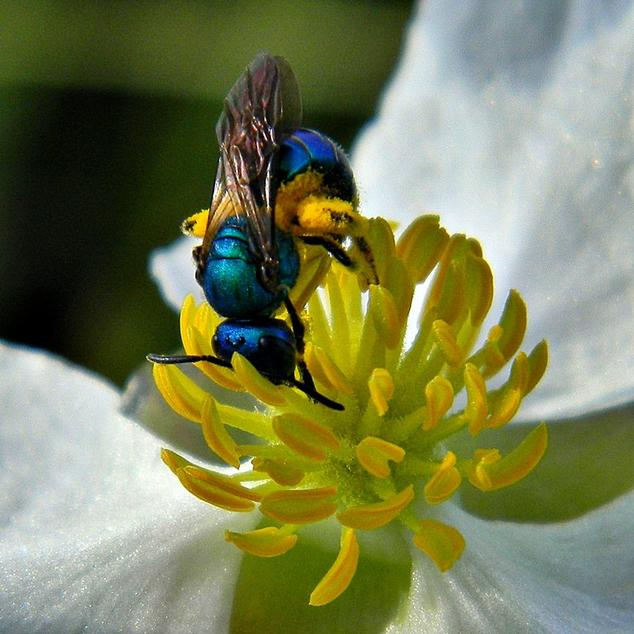 10 Things You Always Wanted to Know About Neonics | NRDC
