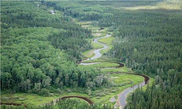 u s marketplace urged to protect canada s boreal forest nrdc