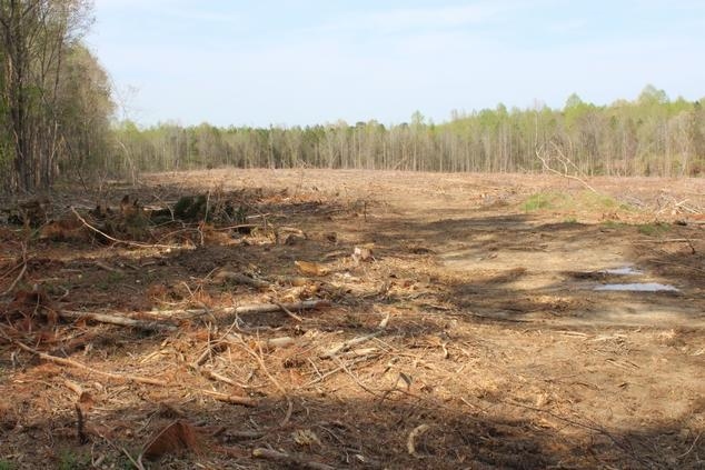 2019 clearcut in the U.S. Southeast. Wood from this site was traced back to Enviva's Northampton, North Carolina pellet facility.
