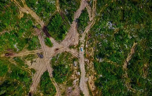 Aerial image of long-term impacts of logging from Logging Scars report