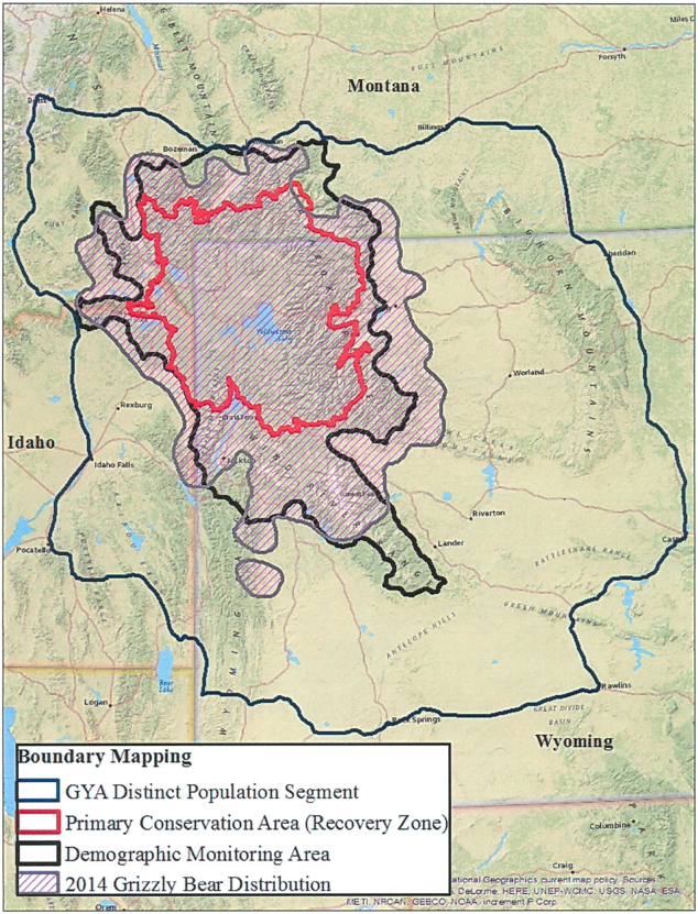 Montana decides not to hunt grizzly bears this year nrdc for Idaho fish and game maps