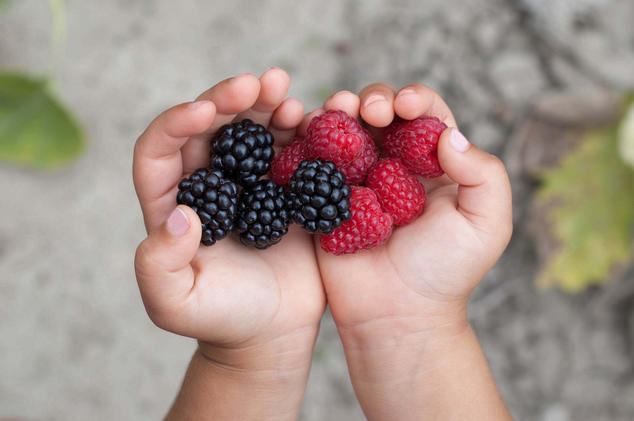 Child holding berries