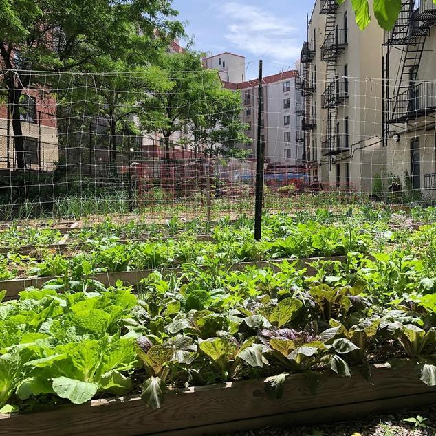 Kelly Street Garden, located in the Longwood/Hunts Point section of the South Bronx