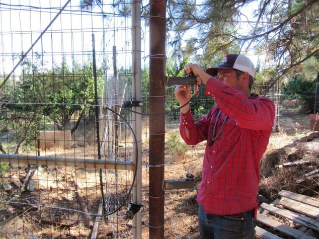 Oliver connects an electrified gate to a fence using insulated wire.