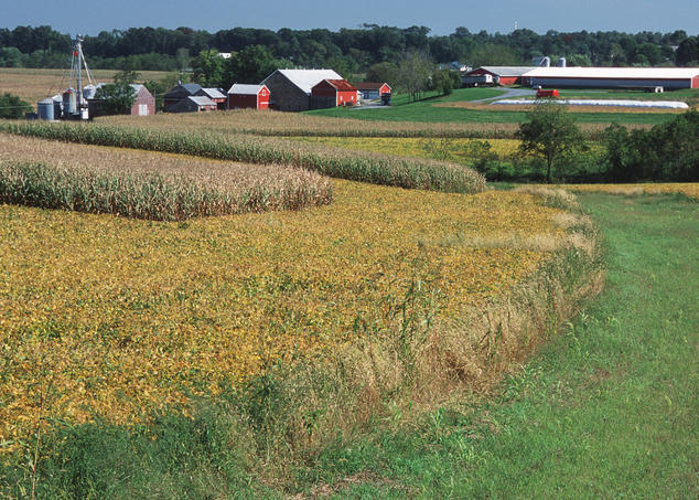 Field of golden cover crops near barn in Pennsylvania