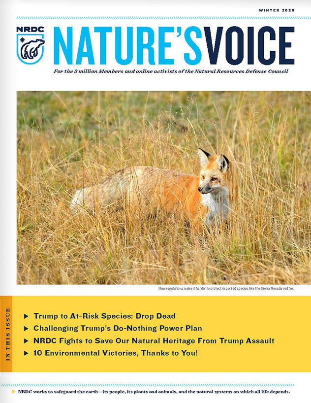 Nature's Voice - Winter 2020 Issue