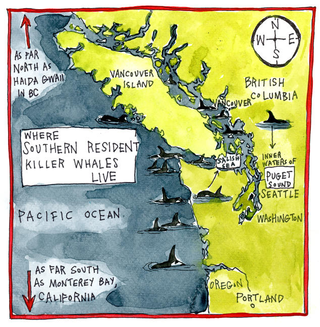 Where Southern Resident killer whales live: As far north as Haida Gwaii in BC and as far south as Monterey Bay, California.