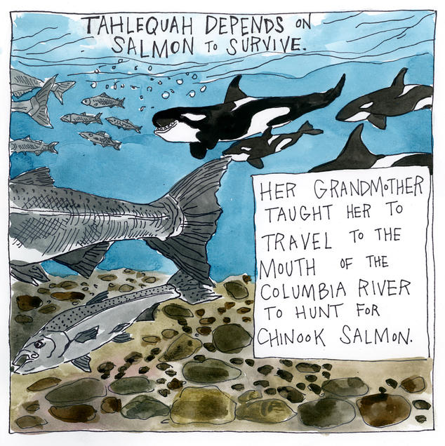 Tahlequah depends on salmon to survive. Her grandmother taught her to travel to the mouth of the Columbia River to hunt for Chinook salmon.