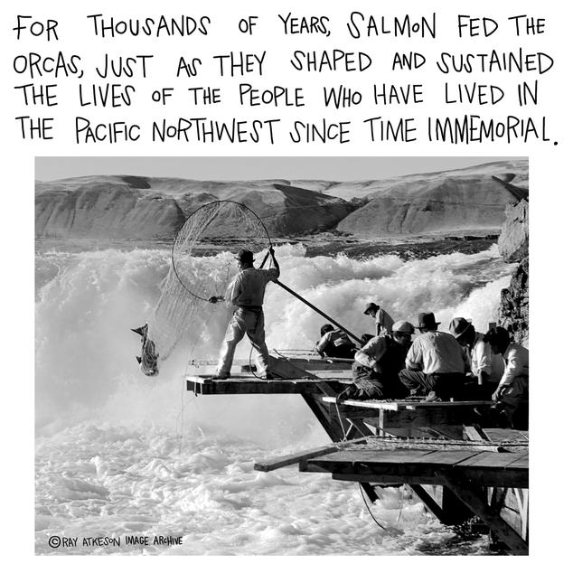 For thousands of years, salmon fed the orcas, just as they shaped and sustained the lives of the people who have lived in the Pacific Northwest since time immemorial.