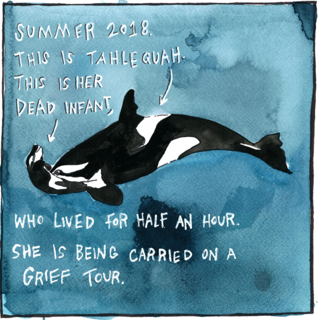 A Home for Orcas
