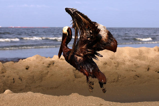 what we learned from the bp oil spill nrdc