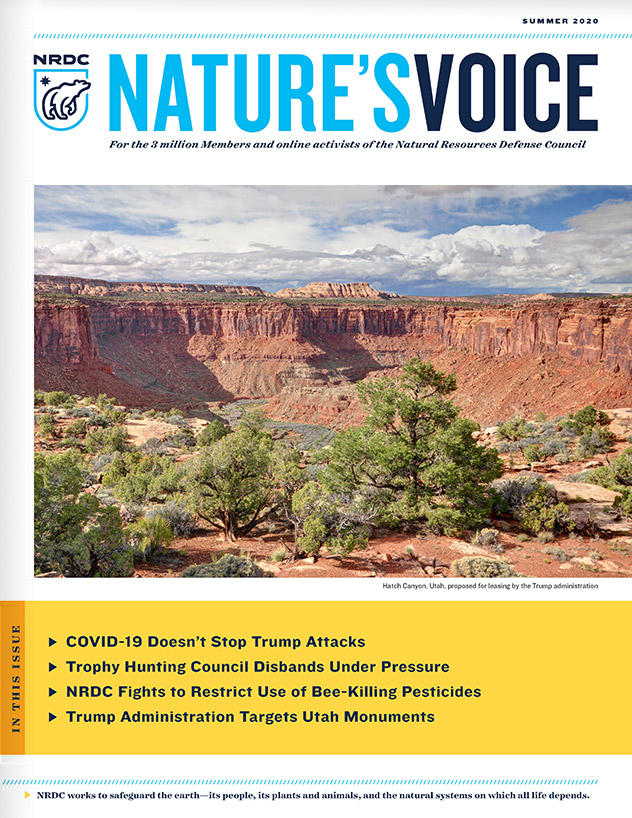 Nature's Voice Summer 2020 Issue Cover