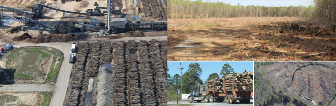 House Climate Crisis Action Plan Gets a Lot Right on Biomass