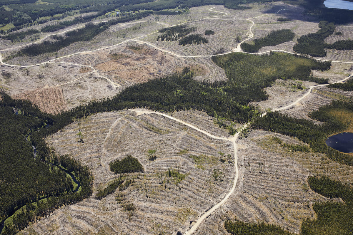 The Canadian Logging Industry's Spin Cycle