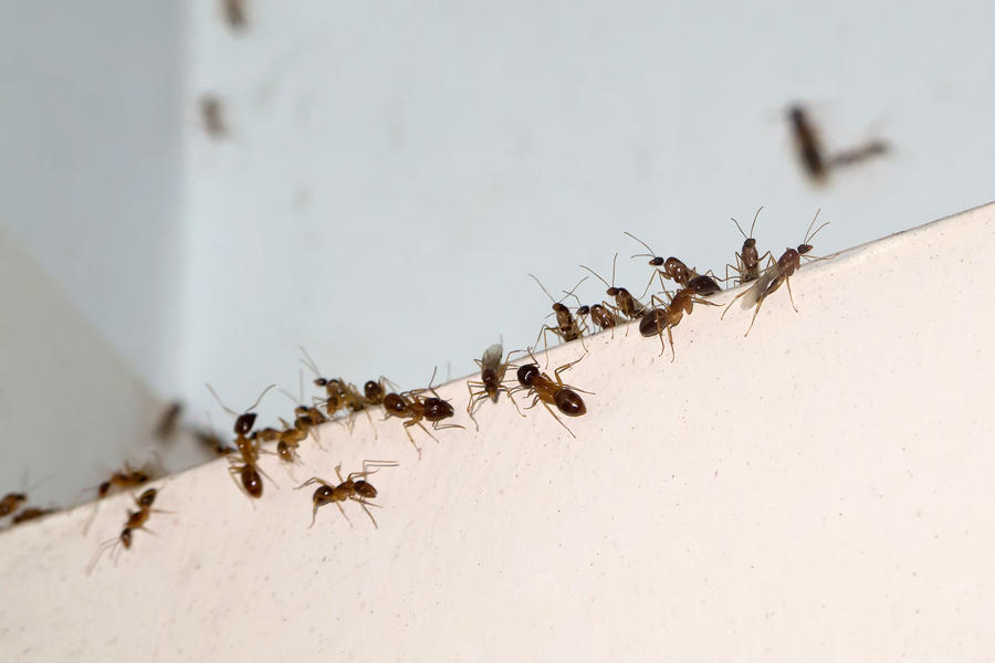 Control Household Pests Without Scary Poisons | NRDC