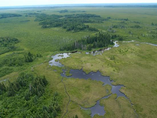 To Save Species, Protect 30% of Freshwaters by 2030