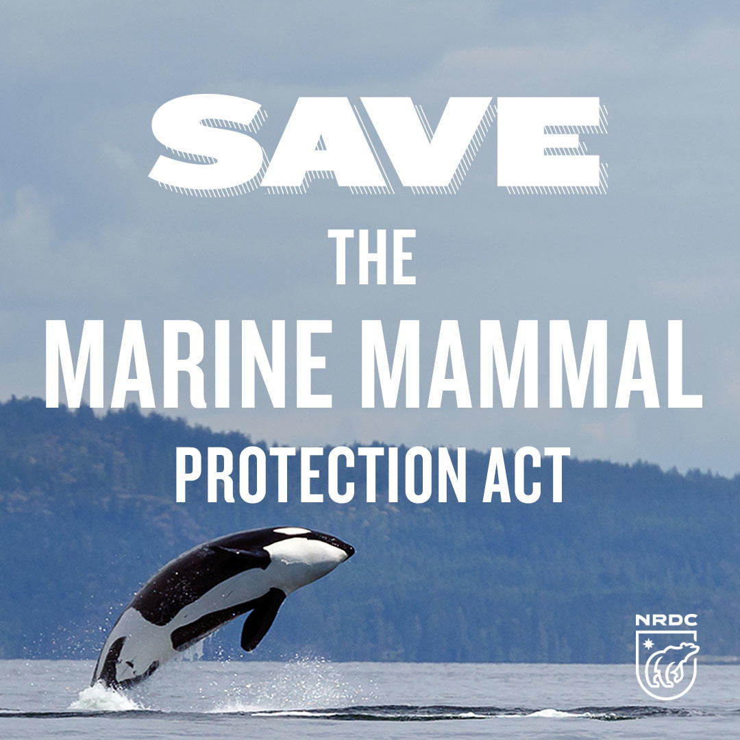 Locally Protected Marine Species: Law Protecting Marine Mammals Turns 45, Congress To Kill