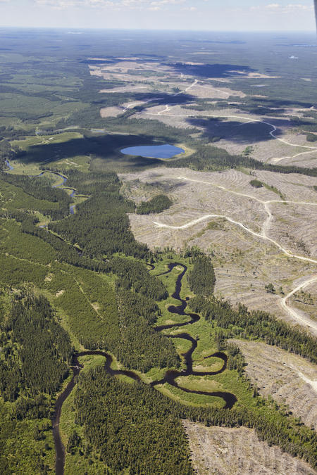 An image of clearcutting in Canada's boreal forest